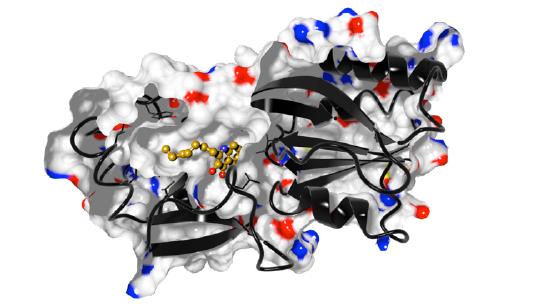 Abbildung einer molekularen Struktur von PqsR (alternative Bezeichnung: MvfR)