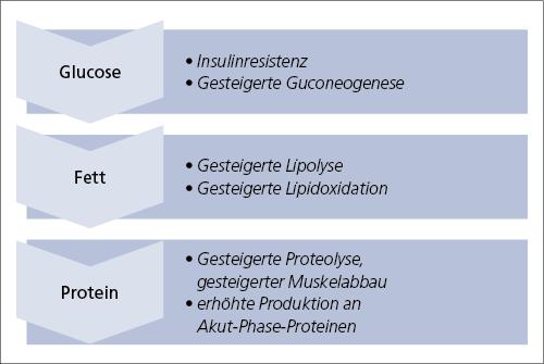 Abb. 8: Proteinreiche und fettreiche Ernährung.