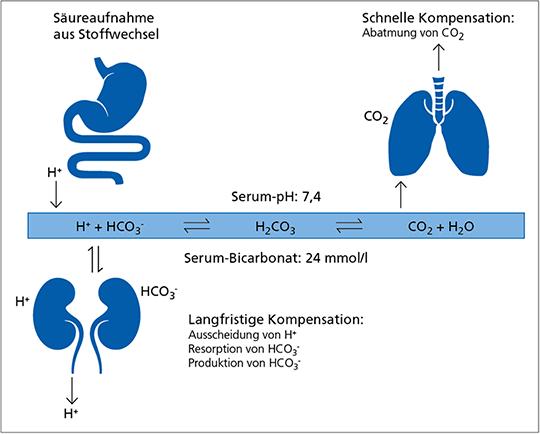 Abb. 7: Das Bicarbonat-Kohlendioxid-Puffersystem (mod. nach (39))