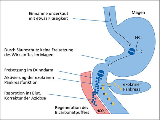 Abb. 8: Die magensaftresistente Galenik von Tabletten und Dragees stellt die Freisetzung des Wirkstoffes im oberen Dünndarm sicher.