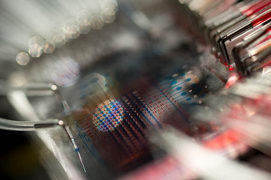 Labor im Miniaturmaßstab: Die Chips, auf denen sich Pankreaszellen züchten lassen, sind so groß wie eine Daumenkuppe.© Matthias Meier, Universität Freiburg