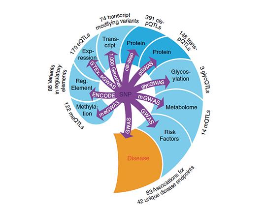 Netzwerk der Interaktion von Genom, Proteom und Erkrankungen.©  Nature Communications / CC BY 4.0