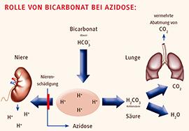 Abb. 1: Das Kohlensäure-Bicarbonat-System ist das wichtigste Puffersystem des menschlichen Organismus. Es besteht aus Kohlensäure (H2CO3 ) als Säure und Bicarbonat (HCO3 ) als dazugehöriger Base. Bei einer Azidose (z.B. durch Nierenschädigung und mangelnder Ausscheidung von Protonen (H+) über die Niere) ermöglicht die Zufuhr von Bicarbonat die Neutralisation der Protonen durch die Bildung von Kohlensäure, die weiter in Wasser (H2O) und Kohlendioxid (CO2 ) aufgespaltet wird. CO2 kann dann als Gas über die Lunge abgeatmet werden. © Grafik: Dr. Adela Žatecky