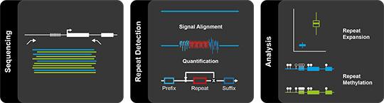 Abb. 1: Schrittweise reicherten die Forschenden zunächst selektiv die Moleküle mit Repeats an, analysierten das elektrische Signal und bestimmten so Länge der Repeats und ihre epigenetische Signatur (© Pay Gießelmann, Max-Planck-Institut für molekulare Genetik).