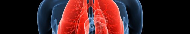 European Lung Cancer Virtual Meeting (ELCC 2021)