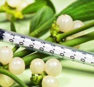 Komplementärmedizin: Misteltherapie als supportive Maßnahme bei Krebserkrankungen