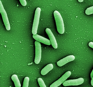 Software sagt aus Genomdaten Eigenschaften von Bakterien vorher