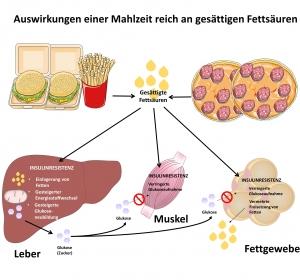 Leberstoffwechselveränderungen durch gesättigte Fettsäuren in Palmöl