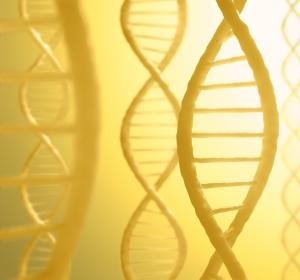 Risikofaktor Lipoprotein(a)-Konzentration: Neue Einsichten erklären genetische Regulation