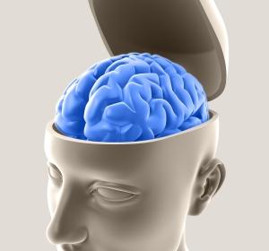 Mangel eines Neurotransmitter-Rezeptors erzeugt Funktionsstörungen im Gehirn