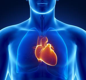 Erstmals Proteom des gesunden menschlichen Herzens entschlüsselt