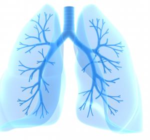 Beta-Lakton als Ansatzpunkt für Tuberkulose-Therapie