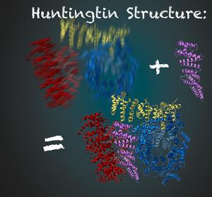 Entschlüsselung der Struktur des Huntingtin Proteins