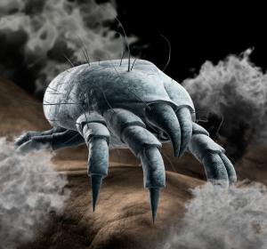 Allergien gegen Milben