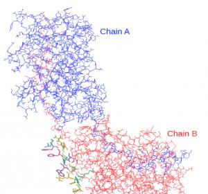 Protein steuert Verklumpung der Thrombozyten bei Thrombose und Schlaganfall