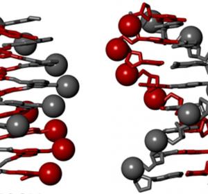 Künstliche Moleküle imitieren die DNA
