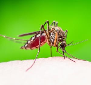 Gängige Desinfektionsmethoden töten Chikungunya-Viren zuverlässig ab
