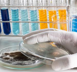 Neue Erkenntnisse zur Wirkungsweise von Antimykotika