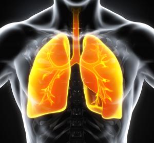 Wie die Lunge zu ihren Immunzellen kommt