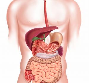 Multiple Sklerose: Umweltfaktoren und Darmbakterien befördern Entzündung