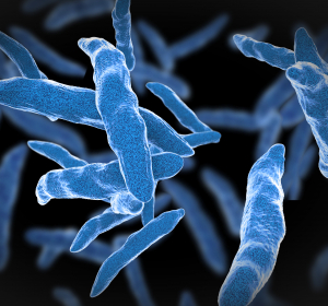 Antibiotika-Resistenz: Multiresistente Tuberkulose-Bakterien