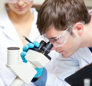 Forschung: DFG fördert Nierenschwerpunkt