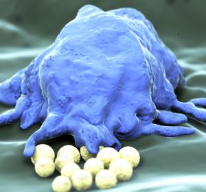 Forschung: Herstellung reifer Blutzellen in Bioreaktoren
