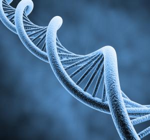 Zellteilung findet erst nach Abschluss der DNA-Replikation statt