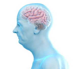 Forschung: Immunzellaktivierung bei Alzheimer