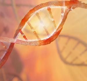 Adipositas: Gen Lypla1 beeinflusst geschlechtsspezifisch die Fettleibigkeit