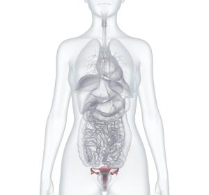 Krebs: Artifizieller Eierstock soll Fruchtbarkeit wiederherstellen