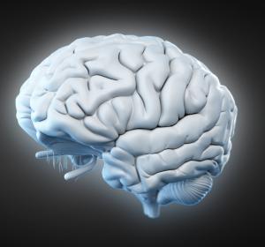 Neurologische Erkrankungen: Aggressive Immunzellen im Tiermodell identifiziert