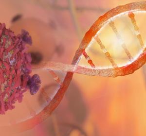 DNA-Schäden: Reparatur möglicher Ansatz für Krebstherapie