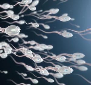 Schwangerschaft: Qualität des Spermas nimmt mit zunehmendem Alter ab