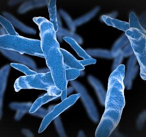 Tuberkulose: Die Suche nach neuen Medikamenten geht weiter