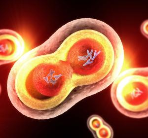 Zellpopulation zur Unterstützung regenerativer Prozesse entdeckt