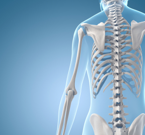 Osteopetrose: Usprung der Osteoklasten im Mausmodell entdeckt