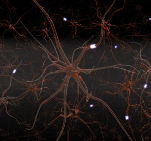 ALS: Therapieansätze zur Verringerung des Absterbens von Nervenzellen