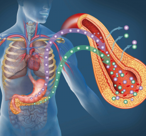 SGLT2-Hemmung bei Typ-2-Diabetikern: Empagliflozin schützt auch Herz und Nieren