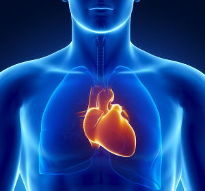 Chronische Herzinsuffizienz: Kardiale Amyloidose kann ursächlich sein