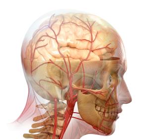 Tiefe Hirnstimulation: Weiterentwicklung bietet Chancen bei der Behandlung neurodegenerativer Erkrankungen