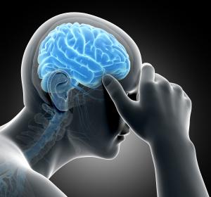 Stress: Molekularer Schalter im Tiermodell identifiziert