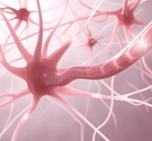Plastische Veränderungen des Gehirns durch feinmotorische Bewegungen