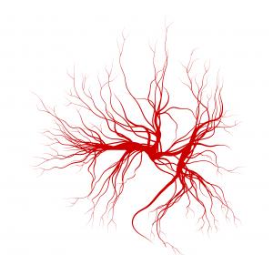 Typ-2-Diabetes: Kardioprotektive Wirkstoffe rücken in den Fokus