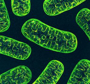 DFG fördert Grundlagenforschung zur Untersuchung der Nanostruktur von Mitochondrien