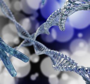 Genomforschung: Körperzellen haben Einfluss auf Keimzellgenom