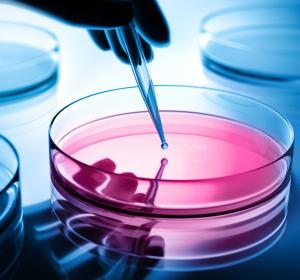 Alternative zur Organspende: Tarnkappen-Technologie soll Abstoßung nach Stammzelltransplantation verhindern