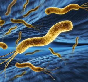 Schistosome und Helicobacter pylori: Co-Infektion verändert Immunantwort