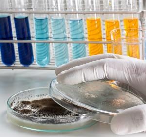 Pilzinfektion: Biomarker für zuverlässigere Diagnostik identifiziert