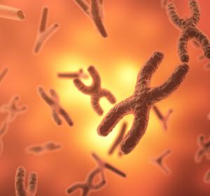 Alter und Krankheit: Seneszente Zellen auch beim Menschen durch senolytische Medikamente entfernbar